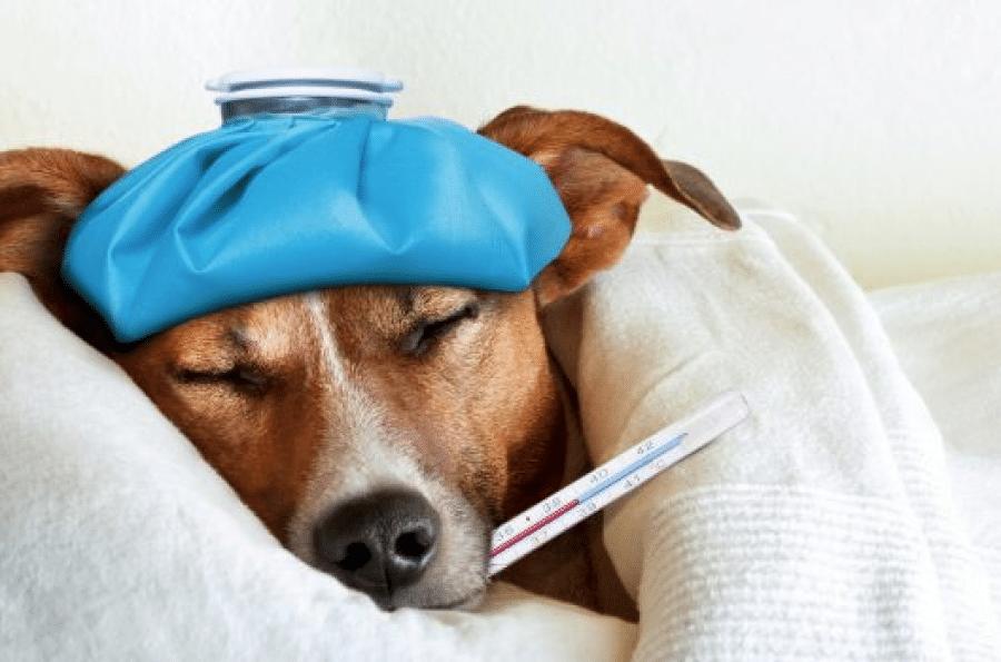 Adeslas Ciudad Real mascotas seguro