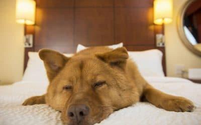 ¿Vacaciones y mascotas? Viajar con tu mascota en familia