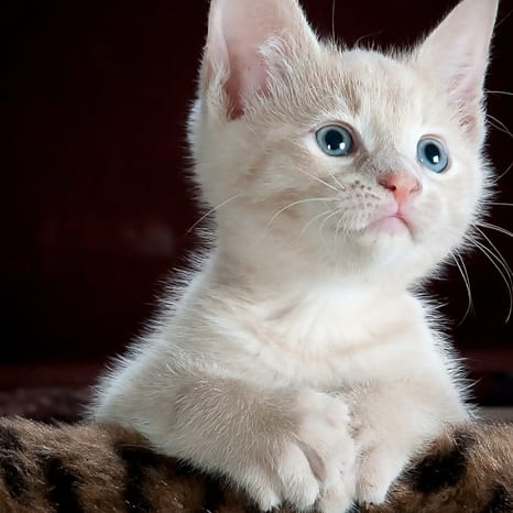 Hoy 4 de Octubre es el Día Mundial de los animales