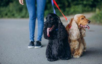 ¿Vuestro perro se puede olvidar de vosotros?